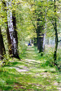 A trail along the Prague-Vienna Greenways
